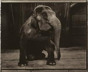 L-elephante_fg700wider